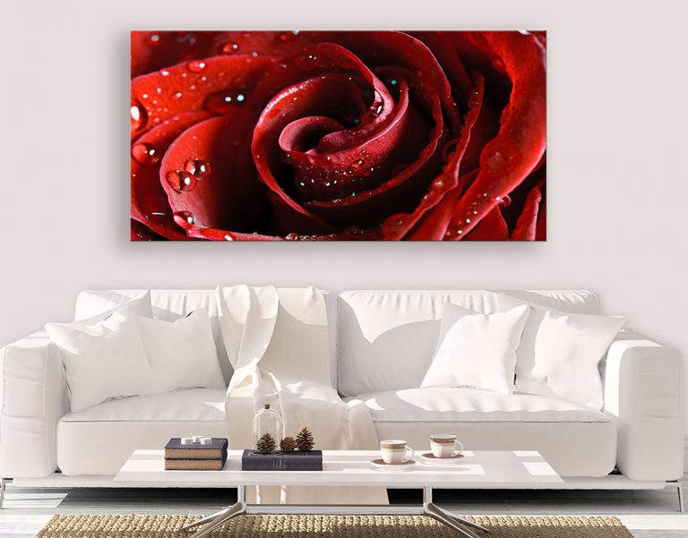 beautiful, bold xl canvas prints of our beautiful wet rose wall art
