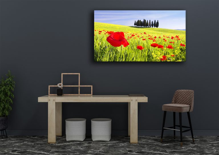 Poppies in the summer