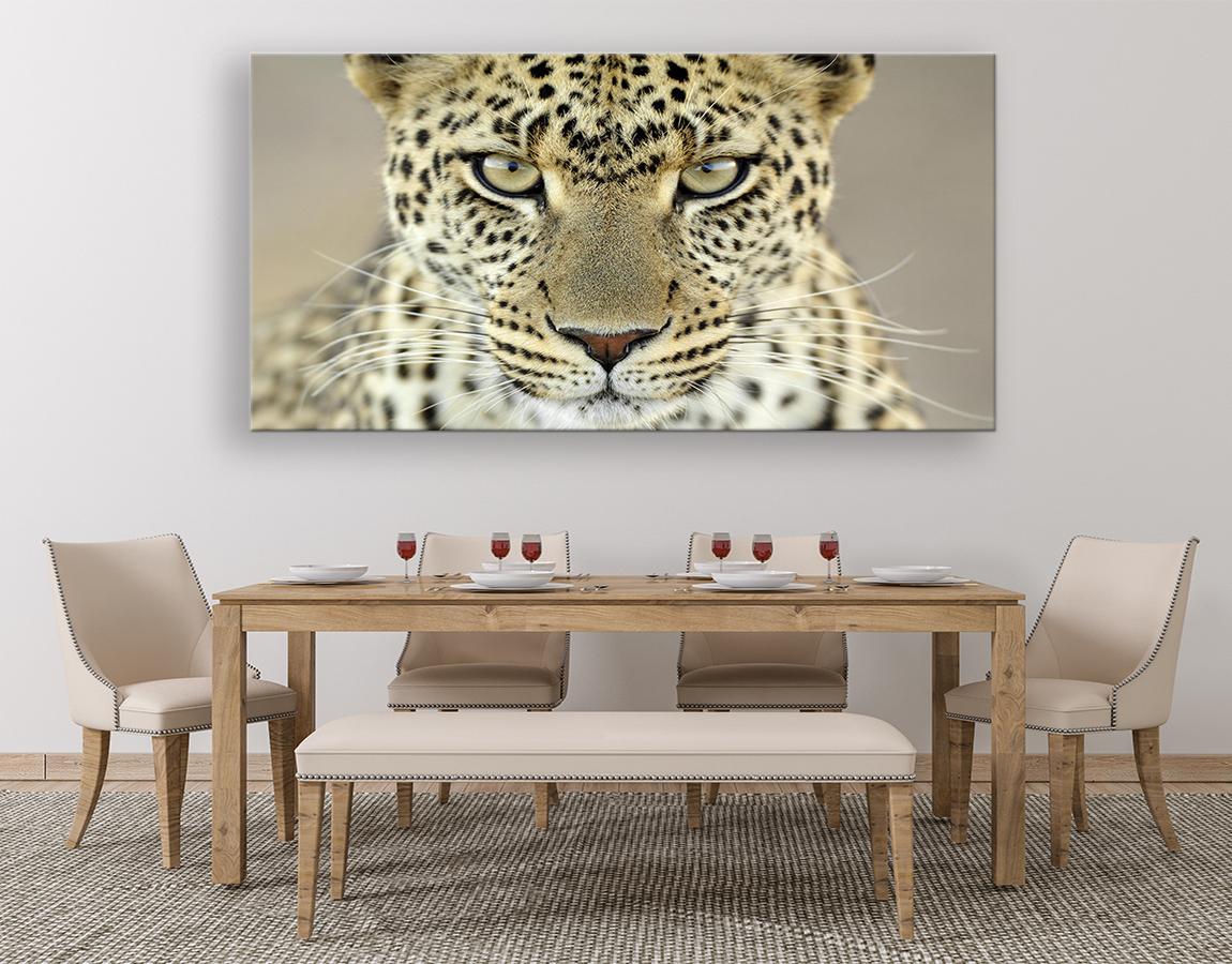 Magestic staring leopard