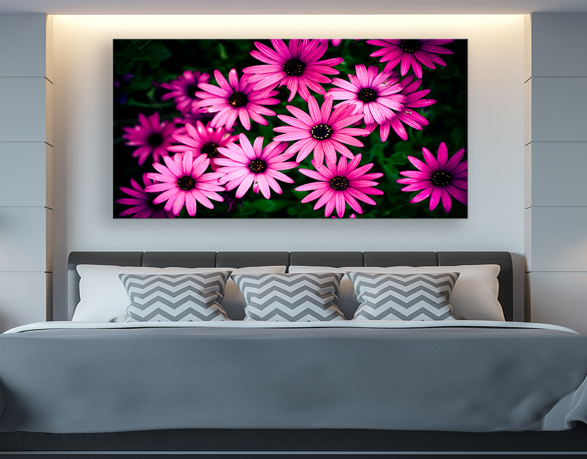 Family of pink daisies